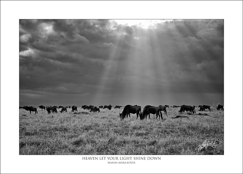 African Fine Art Wildlife Print of Wildebeest in the Maasai Mara, Kenya