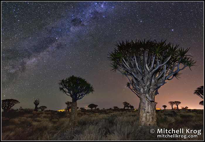 Astro Landscape Photography Quiver Tree Forest Namibia