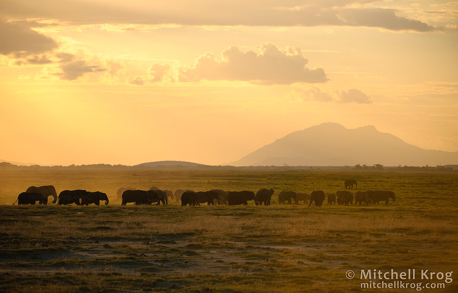 Photo of Caravan of Elephants at Sunset in Amboseli, Kenya
