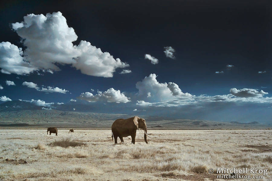 Infrared Photography IR Elephants Amboseli Kenya Wildlife Kilimanjaro