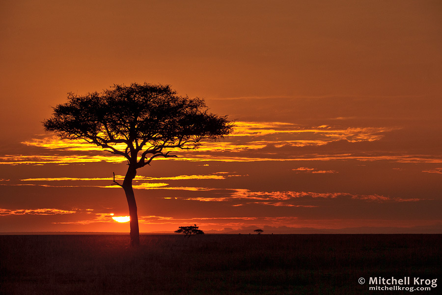 Photo of Lone Tree Sunrise in the Maasai Mara in Kenya - Iconic