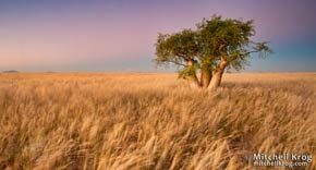 Purchase African Wilderness Landscape Prints